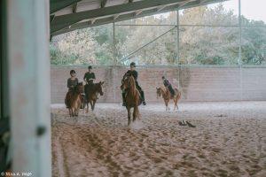 scholae cheval