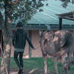 scholae équitation